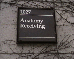 anatomy receiving