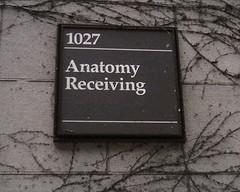 anatomy receiving